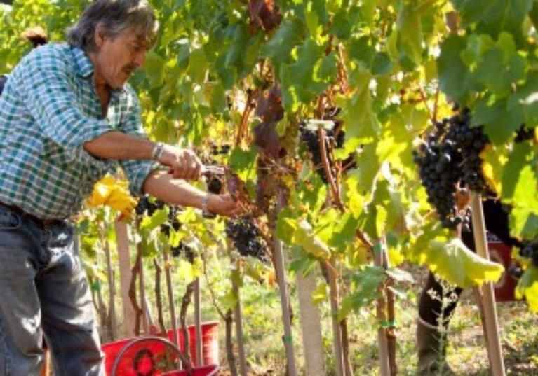 Employeurs agricoles: pas de travail dissimulé, pas de cotisations à payer!